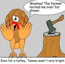 Turkey_tommy